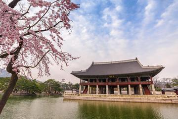 Spring cherry blossom or sakura flower at Gyeongbokgung Palace, Seoul, South Korea