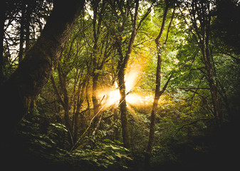 Sun rays beaming through the forest