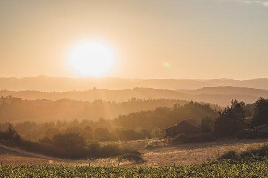Bright sun over rolling hills in Newberg, Oregon