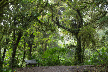 Bench in the forest / landscape