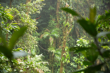 Wild jungle landscape.
