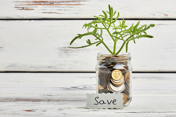 Sprout in jar with coins. Realise your dream.