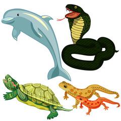 Dolphin cobra snake turtle set.  illustrations