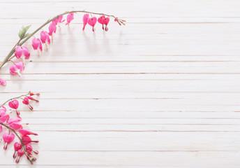 Bleeding heart flowers on wooden background