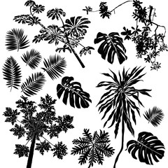 Tropical flowers and plants set