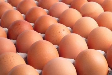 Top view of brown chicken eggs for background.