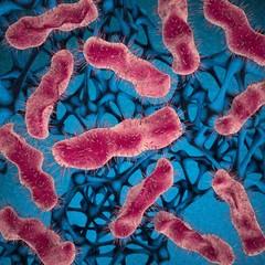 Micro-organisms, unicellular bacteria. 3d image.