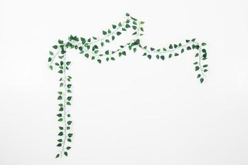 branch of ivy