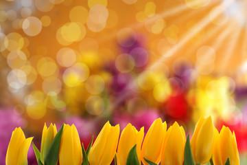 Tło z kwiatami
