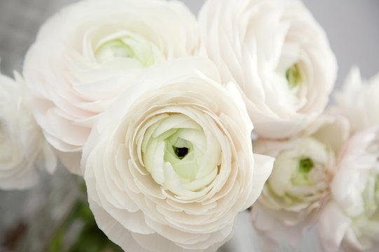 Close up of buttercups flower bouquet