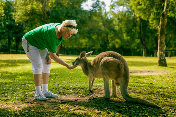 Middle aged woman feeding a kangaroo at the zoo