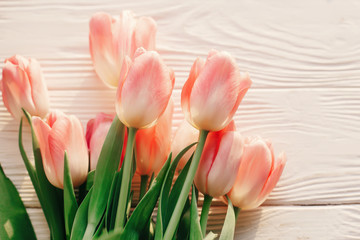 beautiful pink tulips on white rustic wooden background. tender view of spring flowers in soft morning sunlight with space for text. hello spring. blogging advertising concept