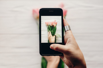 instagram photographer, blogging workshop concept. hand holding phone and taking photo of stylish flower flat lay. pink tulips on white wooden rustic background.space for text