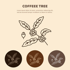 Coffee plant  with leaf, berry, coffee bean. Line icon.