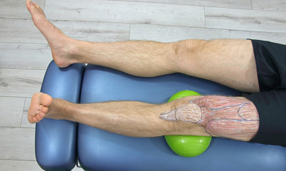human upper leg anatomy - sketch on body. exercise on oval ball