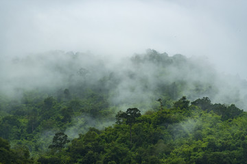view of tropical forest in Thailand