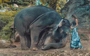 Picture presenting woman taming an elephant