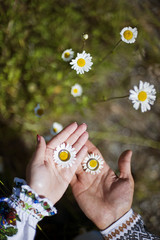 Wedding rings on the flowers in the daisies