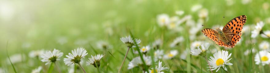 Kwiaty 693
