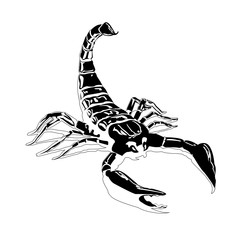 Black scorpion on a white background isolated shiny smooth