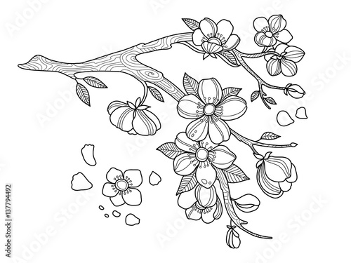 Cherry blossom coloring book vector illustration stock for Cherry blossom coloring pages