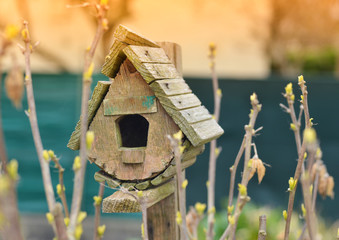 Bird house and the first spring gentle leaves.