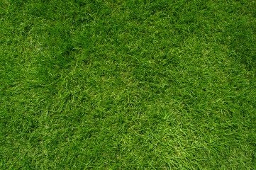 Top view of green lawn