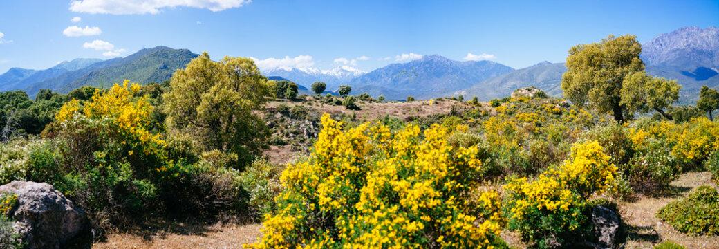 Landscape of corsica