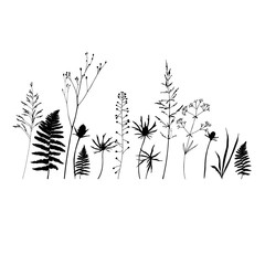 Vector floral background with wild meadow flowers, herbs and fern leaves.