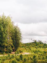 Rural road in woods