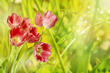 Spring or summer nature background with grass and flowers in the meadow