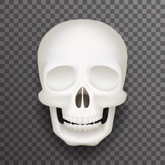 Realistic human skull isolated 3d realistic fashion mockup transparent background design vector illustration