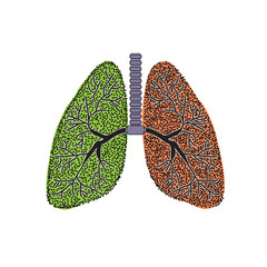 Lungs. The structure of the human lung. Vector illustration on isolated background