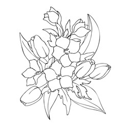 vector black white contour sketch of wild flowers and tulips