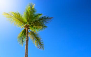 Beautiful tropical sunshine with palm tree and sun.