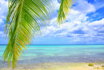 Palm leaves and caribbean sea .