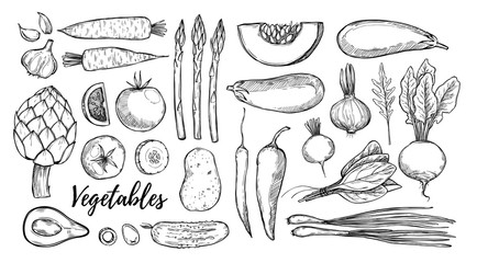 Hand drawn vector illustrations - collection of vegetables (carrots, potatoes, garlic, tomatoes, asparagus, artichoke, pumpkin, spinach). Design elements in sketch style. Perfect for posters