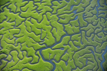 Aerial view of marshes with Seaweed exposed at low tide, Bahía de Cádiz Natural Park, Cádiz, Andalusia, Spain, March 2008. WWE INDOOR EXHIBITION. UNAVAILABLE FOR COMMERCIAL USE WITHOUT PRIOR CONSENT