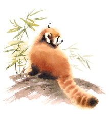 Watercolor Red Panda Sitting Next to Branch with Bamboo Leaves Animal Illustration Hand Drawn Wildlife