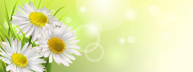 Spring banner with daisies, floral background