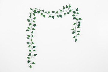 branch of ivy on white background