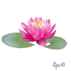Beautiful realistic illustration of a lily or lotus