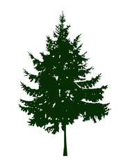 Silhouette of coniferous tree. Can be used as poster, badge, emblem, banner, icon, sign, decor.