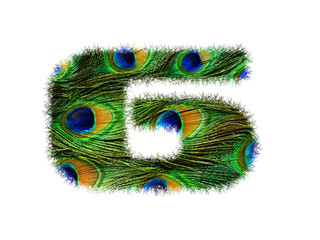 High resolution font number 6 made of peacock feathers pattern isolated on white background