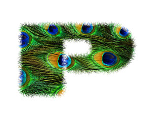 High resolution upper case letter P made of peacock feathers alphabet isolated on white background