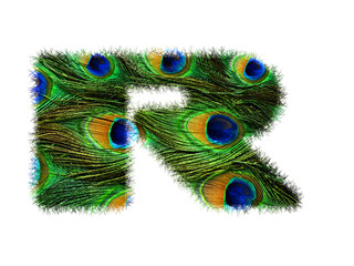 High resolution upper case letter R made of peacock feathers alphabet isolated on white background