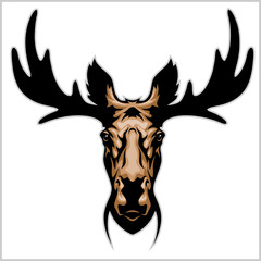 Moose head - isolated on white