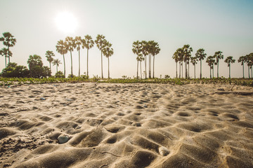 oasis in a desert, clear summer skies,palm trees on the background of a beautiful sunset,Thailand