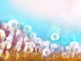Spring summer floral border template. Air glowing dandelions flying in wind with soft focus sun morning outdoors macro on light blue background. Romantic dreamy artistic image.