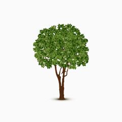 Abstract green vector tree on white background
